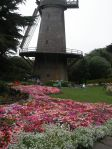 Dutch Windmill and Tulip Garden